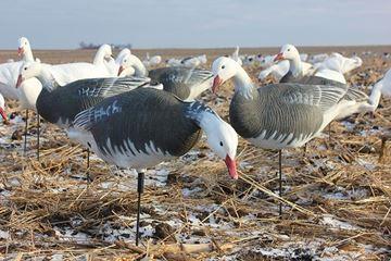 Image de Blue Goose feeder 6pk