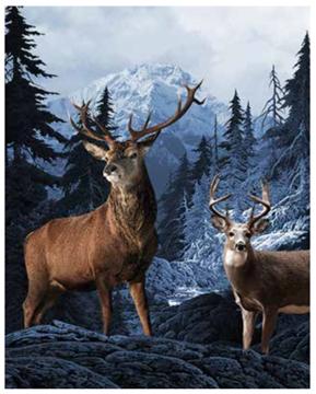 Image de Jeté de chasse à motif de chevreuil