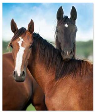 Image de Couverture en fausse fourrure avec cheval 79 x 94