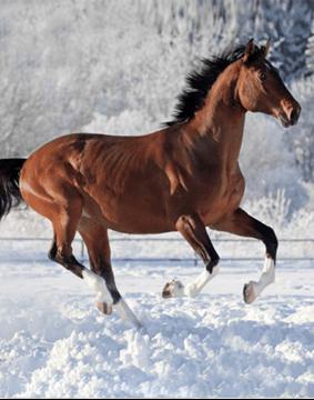 Image de Jeté en micro vision cheval des neiges
