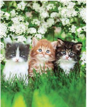 Image de Jeté en microfibre à motifs petit chats et fleurs 48 x 60