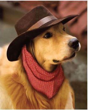 Image de Jeté en microfibre à motifs chien avec chapeau 48 x 60